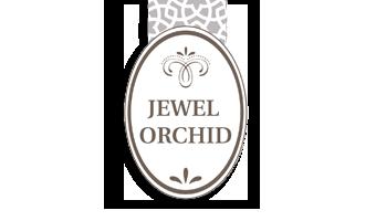 Jewel Orchid – Ludisia Discolor